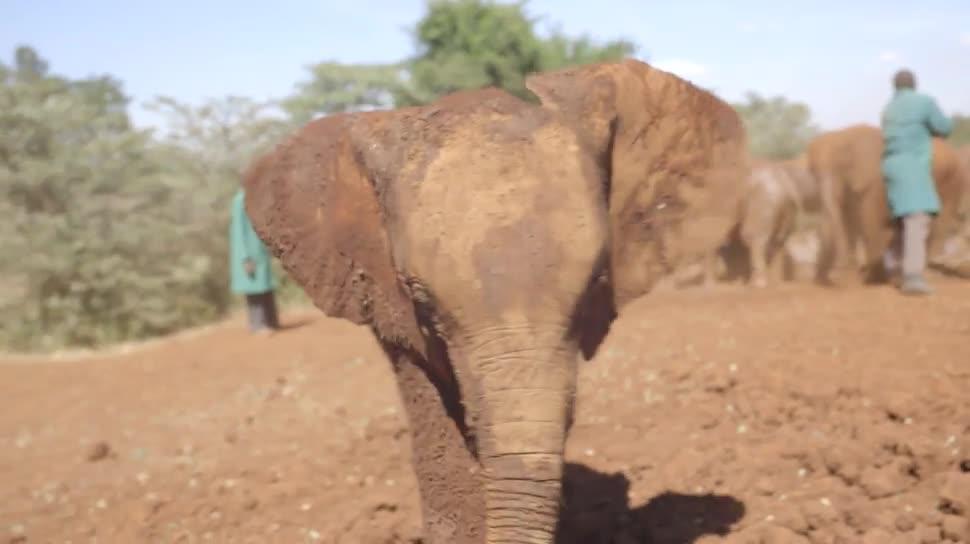 Google, Street View, Panorama, Panoramaaufnahme, Elefanten, Samburu-Nationalpark
