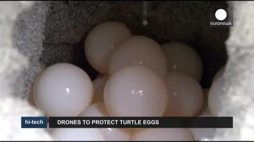 Drohne, Drohnen, EuroNews, Natur, Schildkröten