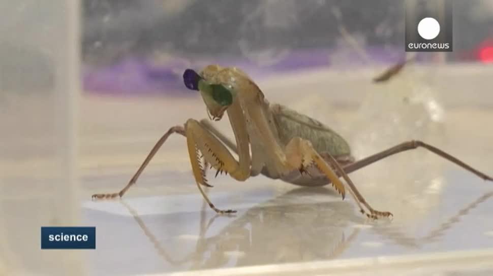 Forschung, 3d, Roboter, EuroNews, Insekten, Gottesanbeterin, 3D-Brilen