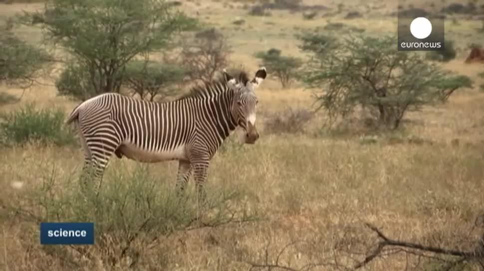 Software, EuroNews, Gps, Tierschutz, Zebras, Grevyzebras, Hot Spotter